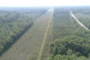Hunting & Timber Investment - Glynn County GA