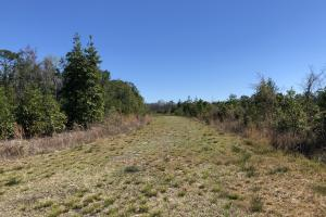 Green Swamp Road Tract in Glynn, GA (13 of 31)