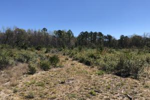 Green Swamp Road Tract in Glynn, GA (27 of 31)