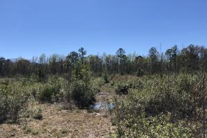 Green Swamp Road Tract in Glynn, GA (26 of 31)