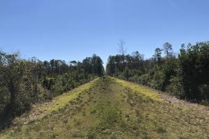 Green Swamp Road Tract in Glynn, GA (14 of 31)