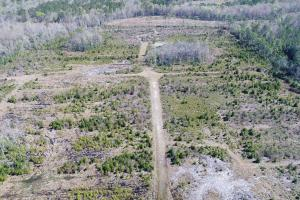 Green Swamp Road Tract in Glynn, GA (11 of 31)
