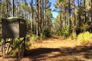 <p>ga land for sale, hunting land for sale, timber land for sale</p>