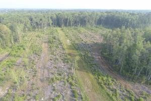 187.32 Acre Hunting & Timber Tract - Glynn County GA