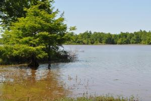 Black Warrior Bay - Lot 108 - Hale County, AL