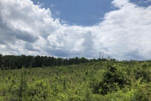Sewell Rd Timber Investment and Homesite  - Elmore County, AL