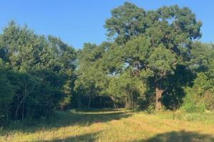 22.5 ac in Van Zandt County, Rolling Terrain, Timber Wildlife