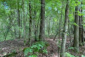 Wilsonville Recreational Homesite & Hunting Tract - Shelby County, AL