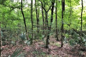 Milton Branch Hunting & Timber Tract - Dallas County, AL