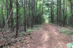 Columbiana Homesite & Hunting - Shelby County, AL
