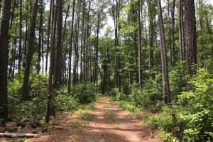 Private Acreage in Bluffton - Beaufort County, SC