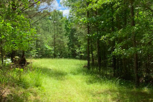 Wooded +/-5 Acre Home or Cabin Site(s) Fronting Highway 43 North - Attala County, MS