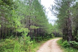 Rose Hill Timber Investment  - Jasper County, MS