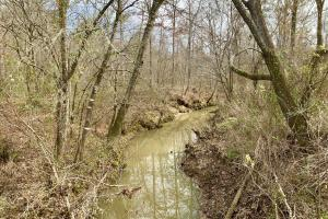 Beaver Creek Camp, Timber, and Hunting Investment - Marengo County, AL