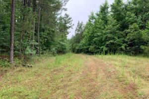 Affordable Hunting and Recreational Timberland With Home/Cabin Site(s) in Kosciusko School District - Attala County, MS