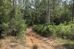 Giddens Road Hunting and Timber Investment   - Baldwin County, AL