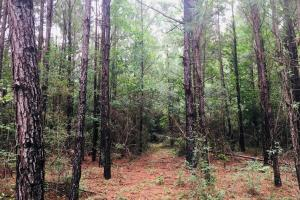 Merchantable Timber with Secluded  Recreational  Opportunities  - Jefferson Davis County, MS