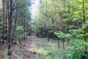 Springvale Road Recreational and Hunting Tract - Kershaw County, SC