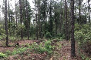 Gordo Timber Investment & Hunting Tract - Pickens County, AL