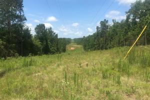 Ridge Crest Road Hunting & Timber Tract