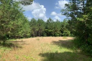 Social Distance on This Secluded Cabin or Home Site North of Kosciusko - Attala County, MS