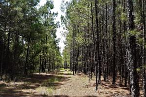 Keystone Heights Timber and Investment Tract - Bradford County, FL