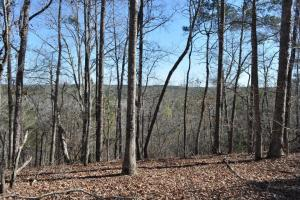 Moundville Tract - Hale County, AL