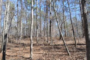 Liberty Church Tract - Hale County, AL