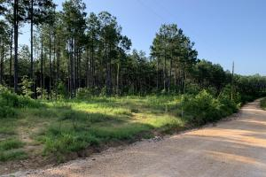 5 Acre Standing Pines Homesite - Henderson County, TN