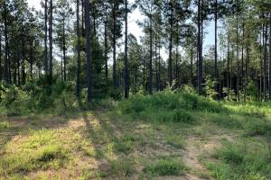 6 Acre Standing Pines Homesite - Henderson County, TN