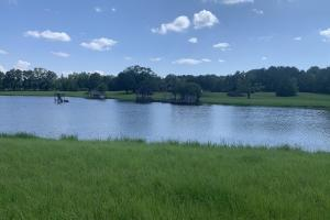 Florence Estate Property  in Rankin County, MS (2 of 8)