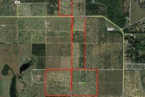 140 Acre Polk County Citrus Grove - Polk County, FL