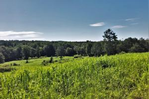 Bear Creek Farm and Recreation Property - Marion County, AL