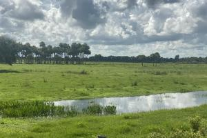 Excellent Pasture or Divide for Lots! - Okeechobee County, FL