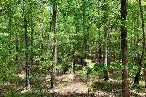 Millport Hunting Land and Campsite  - Lamar County, AL