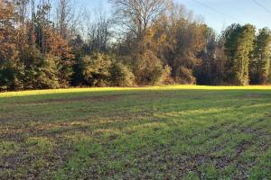 Knoxville Hunting and Recreational Tract  - Greene County, AL