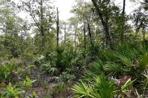 Graham Homesite and Recreation Tract in Bradford County, FL (2 of 18)