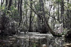 Graham Homesite and Recreation Tract in Bradford County, FL (13 of 18)