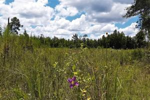 Graham Homesite and Recreation Tract in Bradford County, FL (1 of 18)