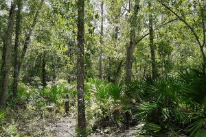 Graham Homesite and Recreation Tract in Bradford County, FL (17 of 18)