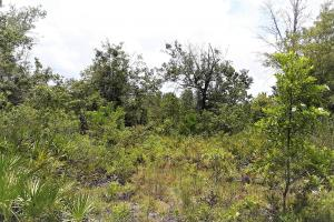 Graham Homesite and Recreation Tract in Bradford County, FL (12 of 18)