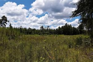 Graham Homesite and Recreation Tract in Bradford County, FL (6 of 18)