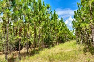 Walley Longleaf and Loblolly Pine Timber and Hunting Investment - Washington County, AL