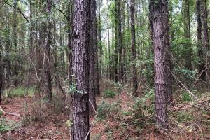 Highway 29 Homesite and Timber Investment - Escambia County, AL