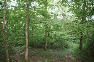 Elkton Homesite & Hunting South Tract - Giles County, TN