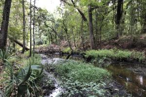 Canal South Recreational Tract - Glynn County, GA