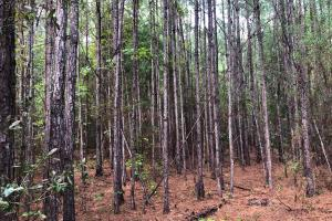 Highway 29 Recreational and Timber Investment - Escambia County, AL