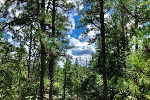 Double Oak Mountain Lot 2 - Shelby County, AL