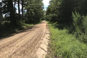 Honey Lake Hunting and Timber - Noxubee County, MS