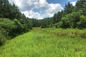 Towery Road Timber, Hunting & Recreational Tract - Monroe County, MS